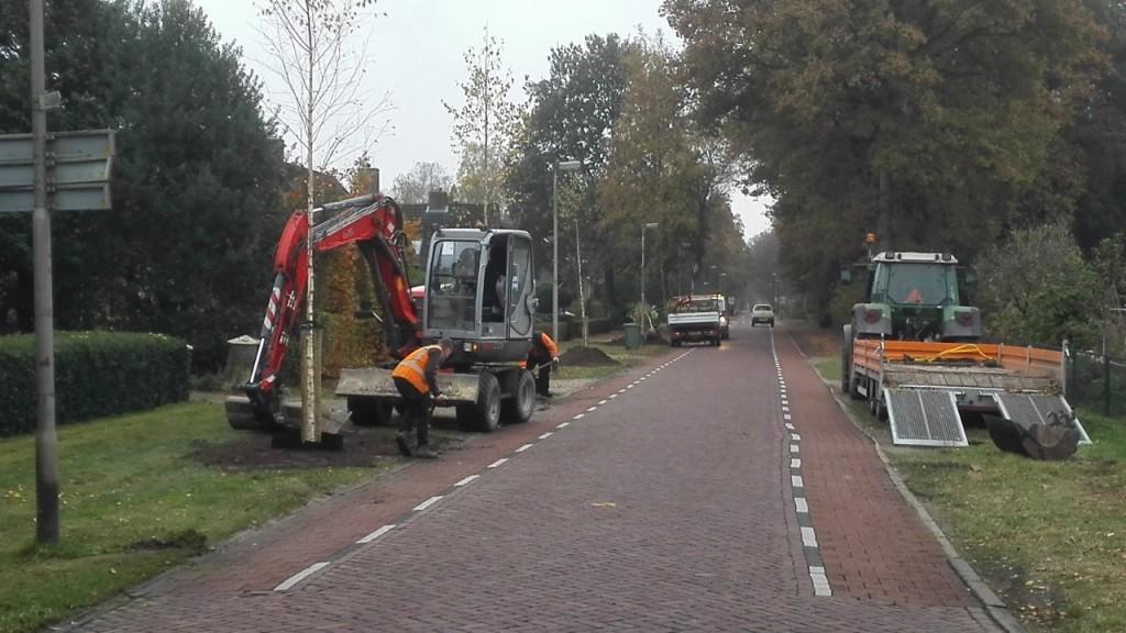 Bomen bij Bruggerdijk in Borkel groot